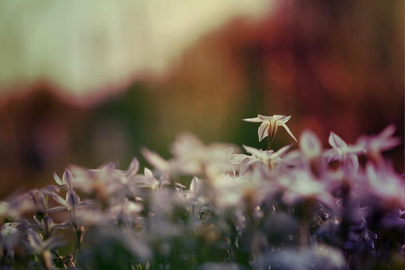 blur-dreamy-texture-texturepalace-38
