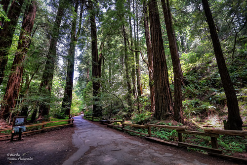 sanfrancisco california usa spain redwood johnmuir castellón muirwoodsnationalmonument sequoias sequoiasempervirens nikond90 afsdxnikkor1024mmf3545ged abariltur