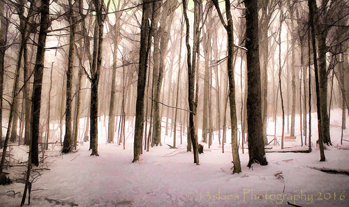 trees snow cold woods day sony trails conservation daytime serene lovely a57