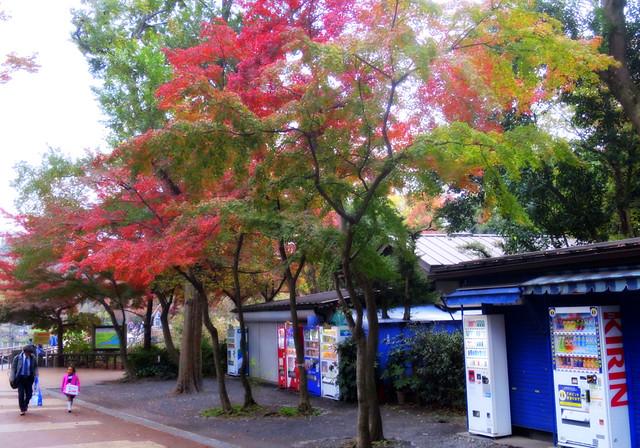 Inokashira Park, Tokyo