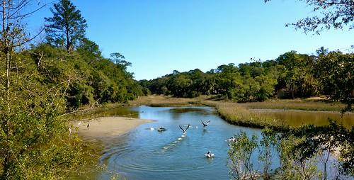 birds shoreline southcarolina pelican atlanticocean adamhall beaufortsc thebirdwhisperer trackhead trackheadstudios trackheadxxx spanishmosstrail