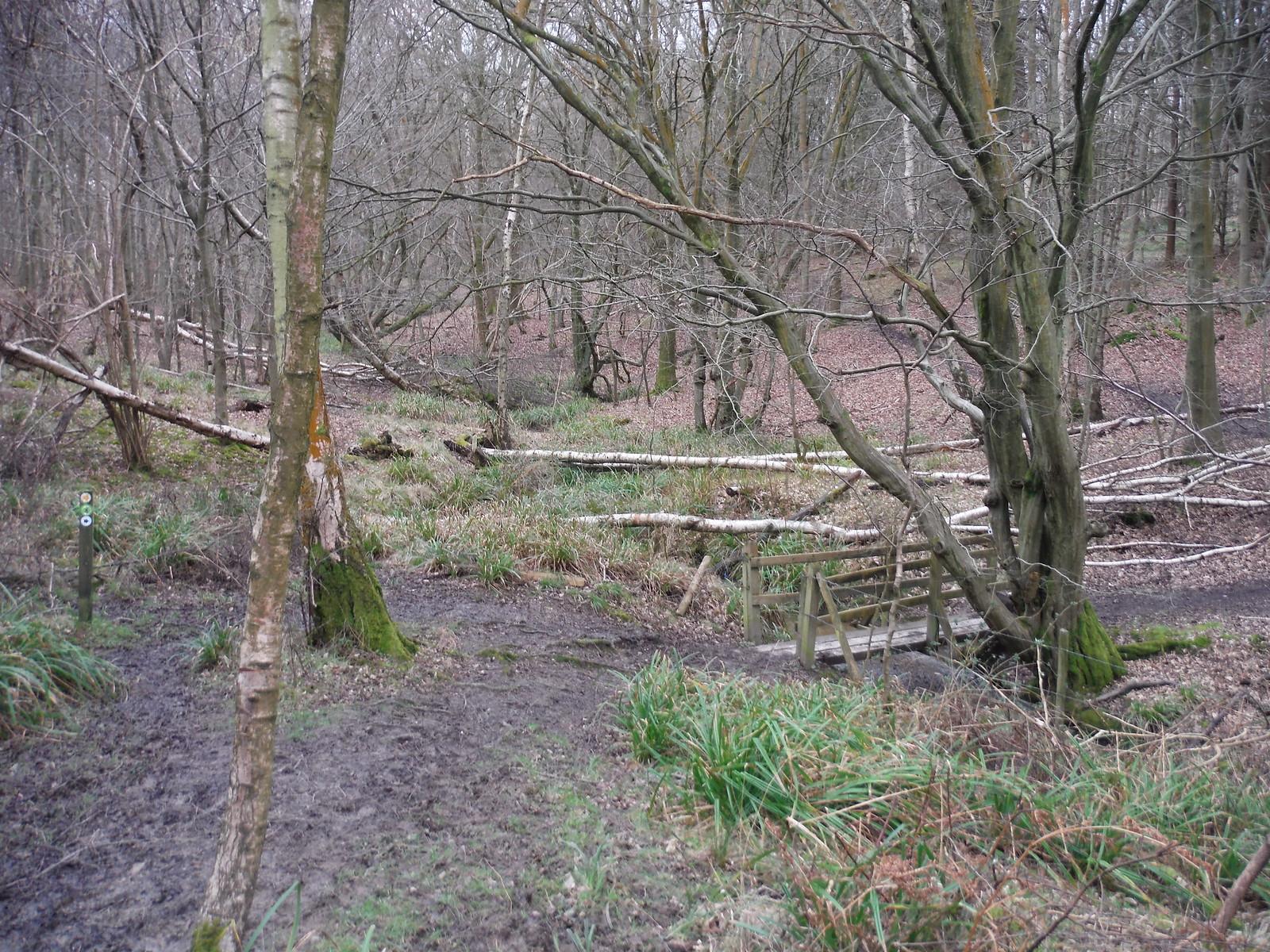 Spittal Brook Crossing, Cowheath Wood SWC Walk 168 Broxbourne Circular
