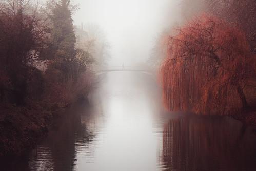 trees mist fog river landscape haze nebel neckar tübingen