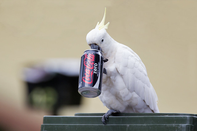 Bird Behaving Badly