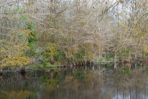 longexposure trees water pond woods florida swamp d750 birdrookeryswamp