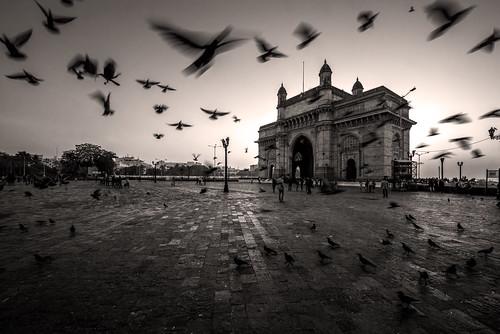 city longexposure travel india monochrome birds horizontal architecture sunrise golden nikon asia cityscape action visit historic bombay maharashtra mumbai goldenhour gatewayofindia in historicplaces