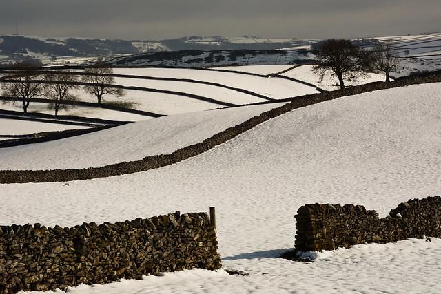 Fields at Litton
