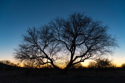 sunset arizona tree us unitedstates tucson coronadonationalforest santacatalinamountains catalinastatepark