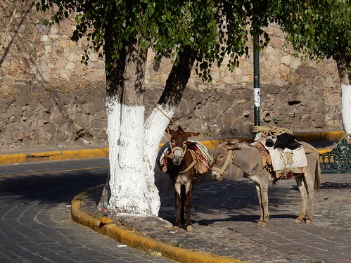 Guanajuato - ezeltjes