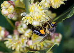 Bee  160316-2684