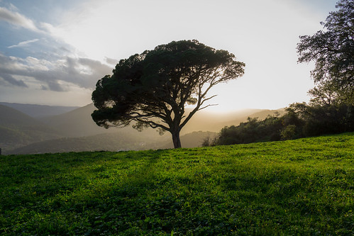 marcial bernabeu bernabéu spain españa andalucia andalucía andalusia huelva alajar alájar peña crag arias montano ariasmontano arbol árbol tree sunset marc