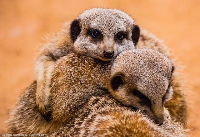Furry Friendship