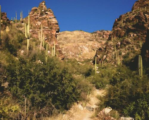 arizona tucson painted canyon saguaro ventanacanyon ventanacanyontrail vertorama christmas2015