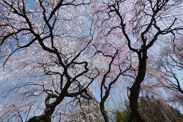 土, 2016-03-26 14:59 - Brooklyn Botanic Garden