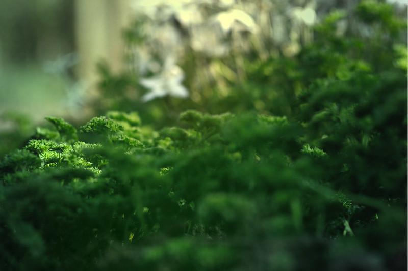blur-dreamy-texture-texturepalace-4