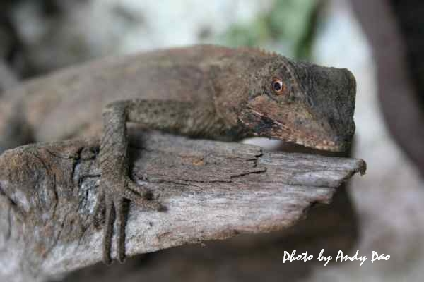 lizard350D07