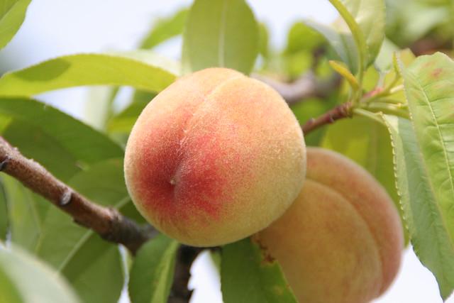 Yummy peach!