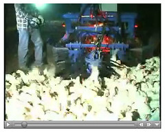 Immer rein in die Hühner!