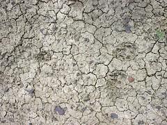 animal tracks mara mountain