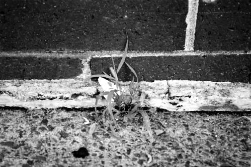 concretejungle