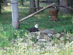 06-26--zoo-visit-- 008