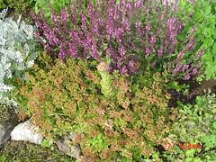 Garden view june 27,2005 017
