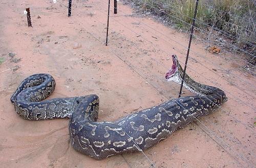 snakeonfence