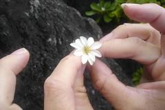 whole flower