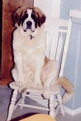 doggy1