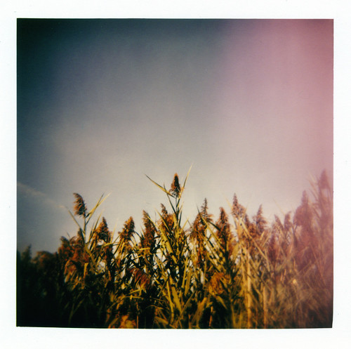 summer 120 film analog holga xpro crossprocessed toycamera slidefilm lightleak analogue fujichrome vignette beachgrass astia100f egyptbeach scituatema
