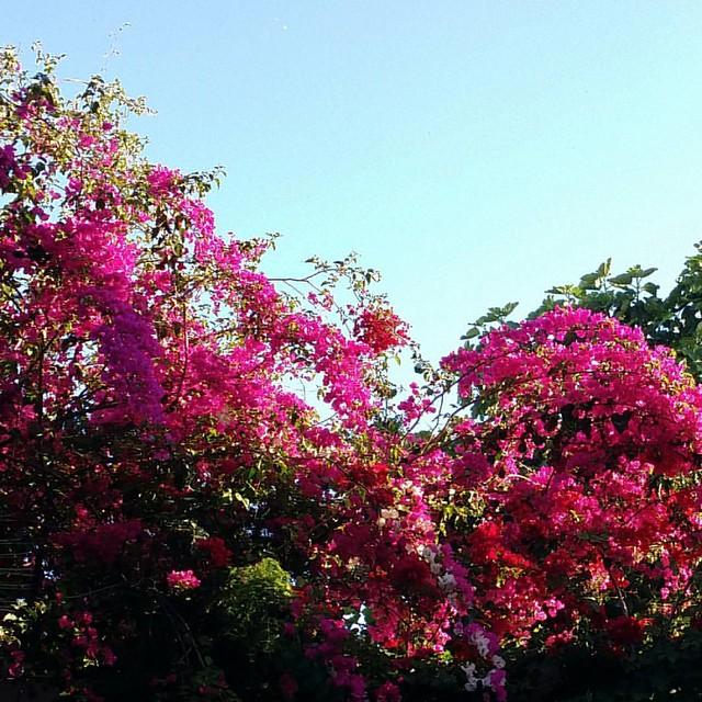 #sbehelkhir #bonjour #goodmorning #afterrun #runoftheday #running #run #runner #tunis #tunisia #rhododendron
