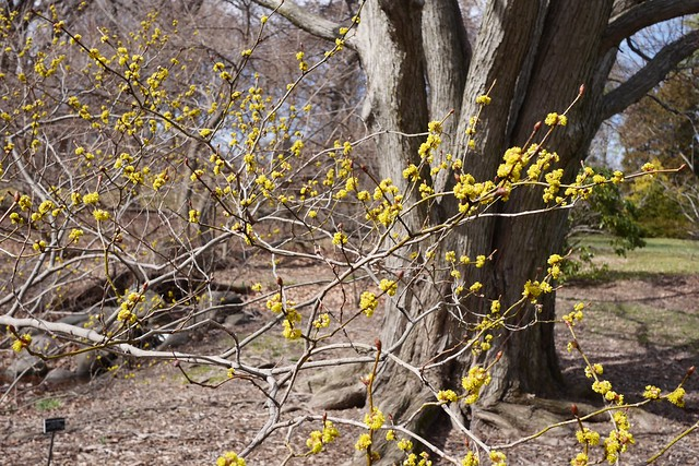金, 2016-03-11 13:33 - Brooklyn Botanic Garden