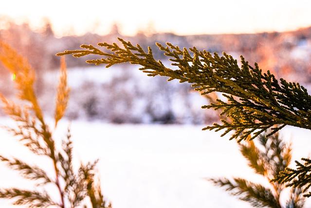 A Winter's Dream