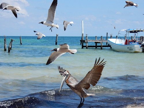 Cancun - birds