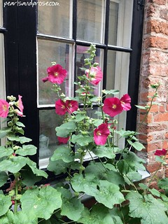 lubeck_hollyhocks_web | by pearlsandprose