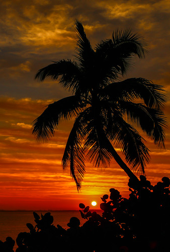 morning sky usa sun seascape tree nature sunrise landscape outside outdoors dawn florida lagoon palm palmtree tropical indianriver seagrapes jensenbeach hutchinsonisland indianriversidepark