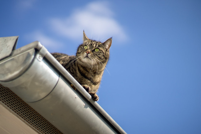 Cat on a Hot Tin Roof [EXPLORE 03/15/16]