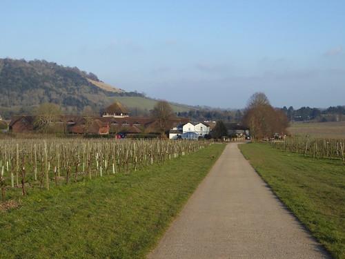 Denbies Wine Estate Effingham to Westhumble walk