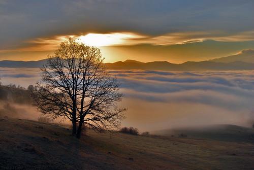 mountain tree sunrise armenia հայաստան ijevan tavush idzhevan idjevan տավուշ լեռներ լուսաբաց ծառ արշալույս արեածագ իջեան