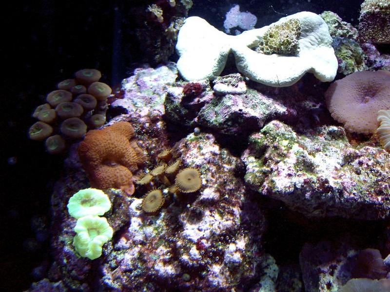 08192007 Saltwater Fish Tank (28) - Version 2