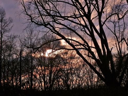 world blue trees light sunset sky sun white tree nature silhouette clouds germany de natur bremen euriope sunsetinmycity