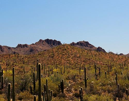 arizona cactus nature sonora landscape desert tucson desertmuseum