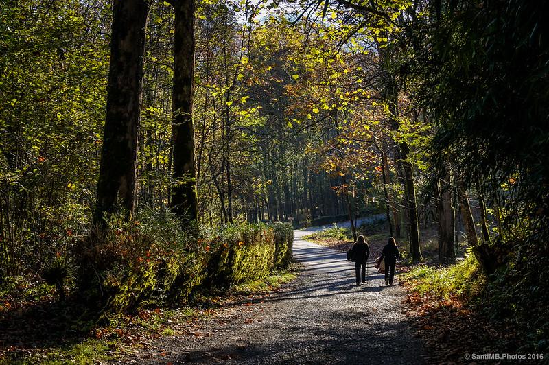 Aquellos paseos de otoño