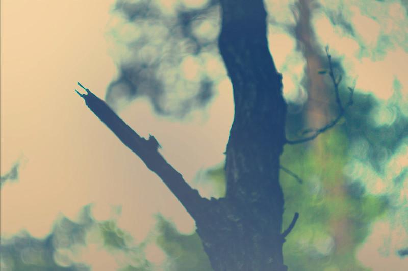 blur-dreamy-texture-texturepalace-11