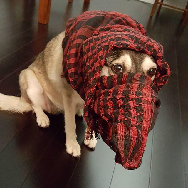 Aloha-poopsinyard #muzzie #dog #goatfucker #muslim #islam.…   Flickr