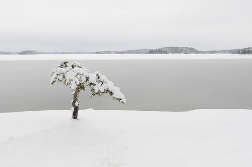 winter snow pine canon finland 1d 2470l lappeenranta