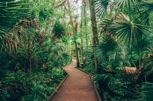 trees color green nature forest landscape orlando colorful raw florida trails hike palm trail jungle hammock tropical boardwalk longwood centralflorida floridastatepark wekiwa wekiwasprings vsco floridahikes vscofilm