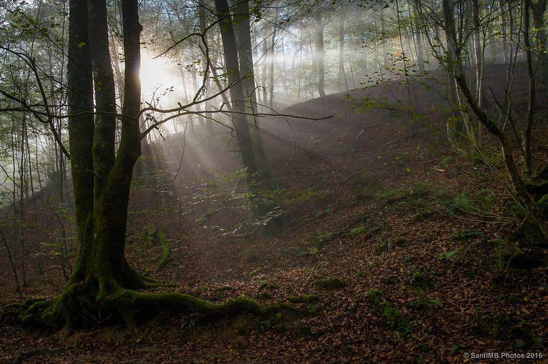 Bosque del Señorío de Bértiz