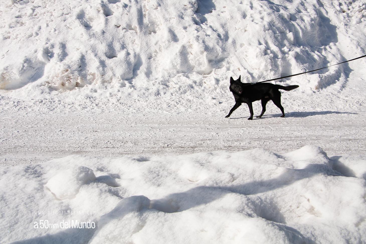 A bajo cero en Laponia