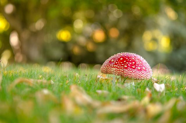 Autumn Magic...